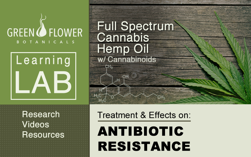 Full-Spectrum-Cannabis-Hemp-Oil-CBD-Antibiotc-Reistance