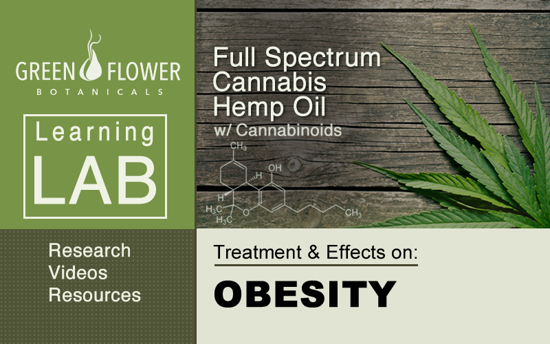 Full-Spectrum-Cannabis-Hemp-Oil-CBD-Obesity