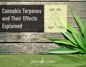 Cannabis terpense and their effects explained