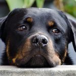 Using CBD Oil To Control Anxiety In Pets - Green Flower Botanicals