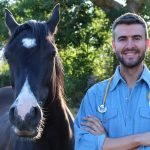 Equine: CBD For Horses