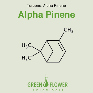 Alpha Pinene - Terpene