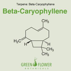 Beta Caryophyllene -Terpene