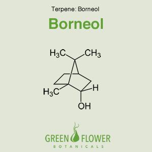 Borneol - Terpene