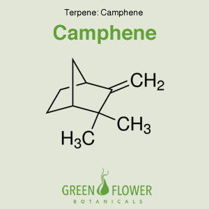 Camphene - Terpene