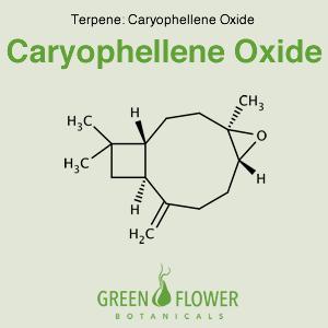 Caryophyllene Oxide - Terpene