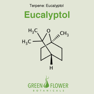 Eucalyptol - Terpene