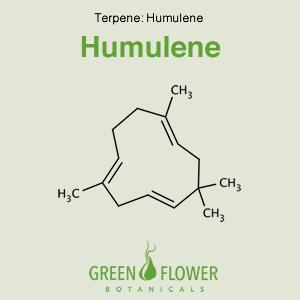 Humulene - Terpene