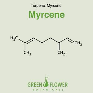 Myrcene - Terpene