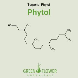 Phytol - Terpene