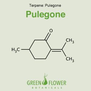 Pulegone - Terpene