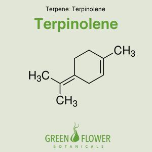 Terpinolene - Terpene