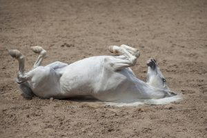 Various benefits of using CBD for your horse