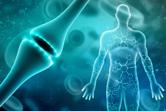 How CBD oil benefits the endocannabinoid system