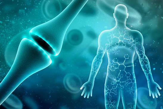 How CBD oil benefits the endocannabinoid system
