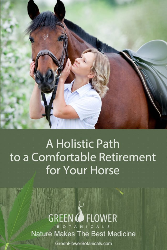 CBD Oil For Horses: A Holistic Path to a Comfortable Retirement for Your Horse